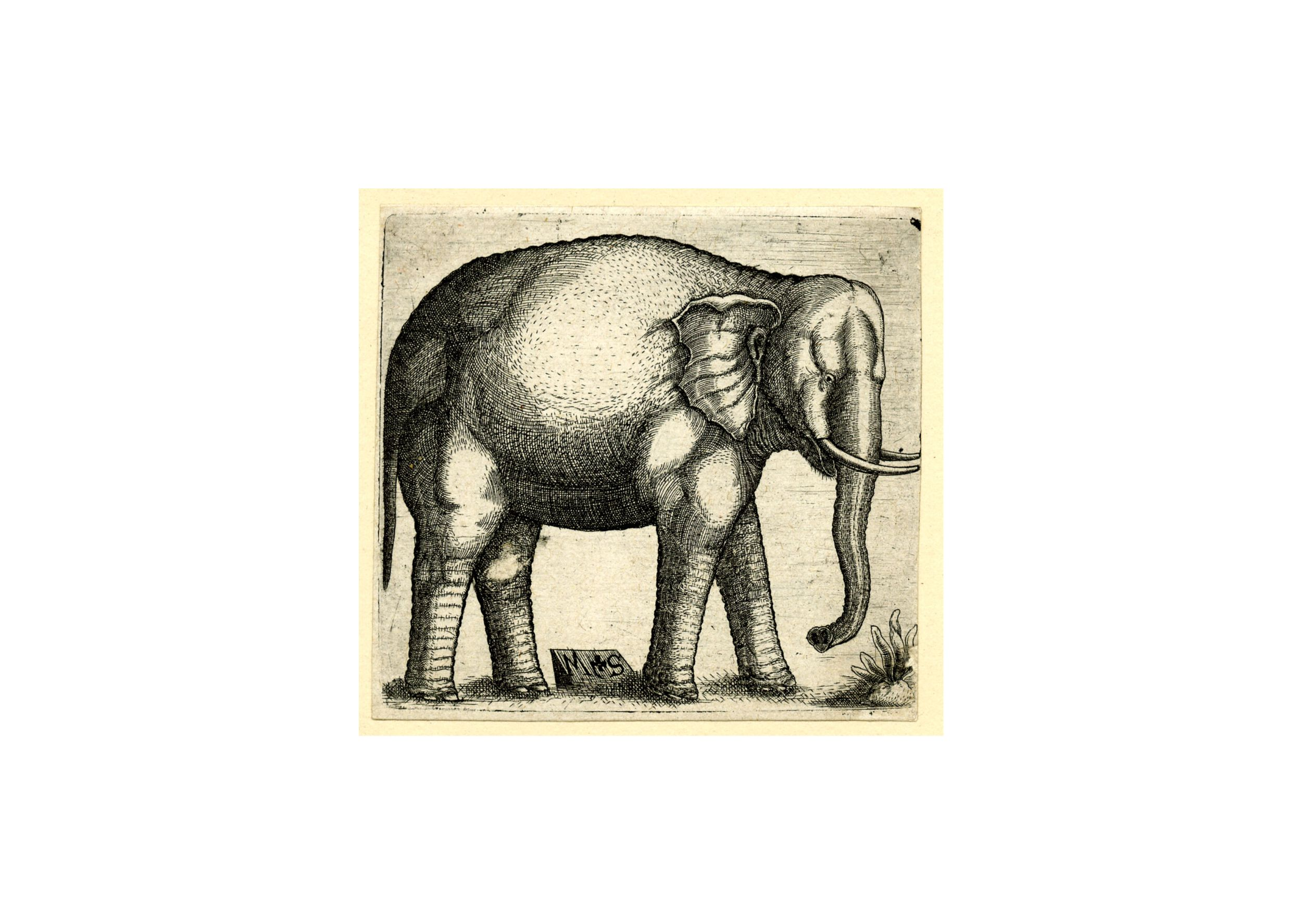 Making art of history annone the elephant engraving biocorpaavc Image collections